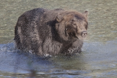 Grizzly1aSS_10255_Home